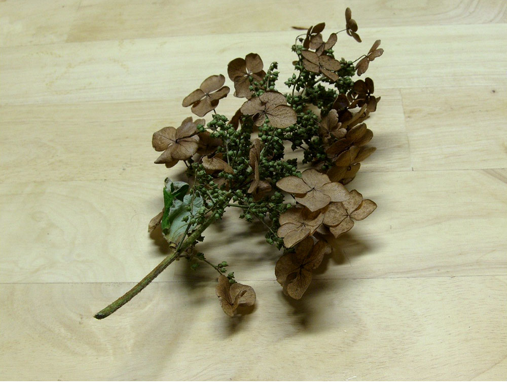 Making Scale Trees from Hydrangea Blooms 4