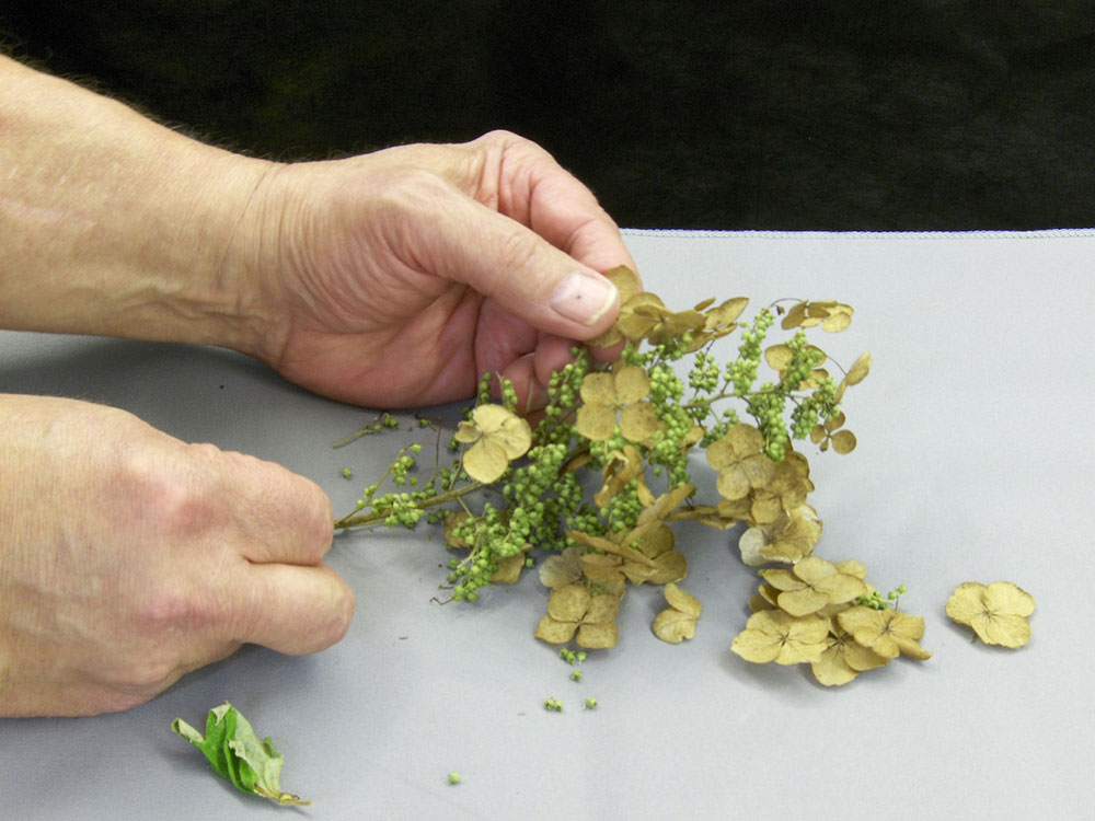 Making Scale Trees from Hydrangea Blooms 5