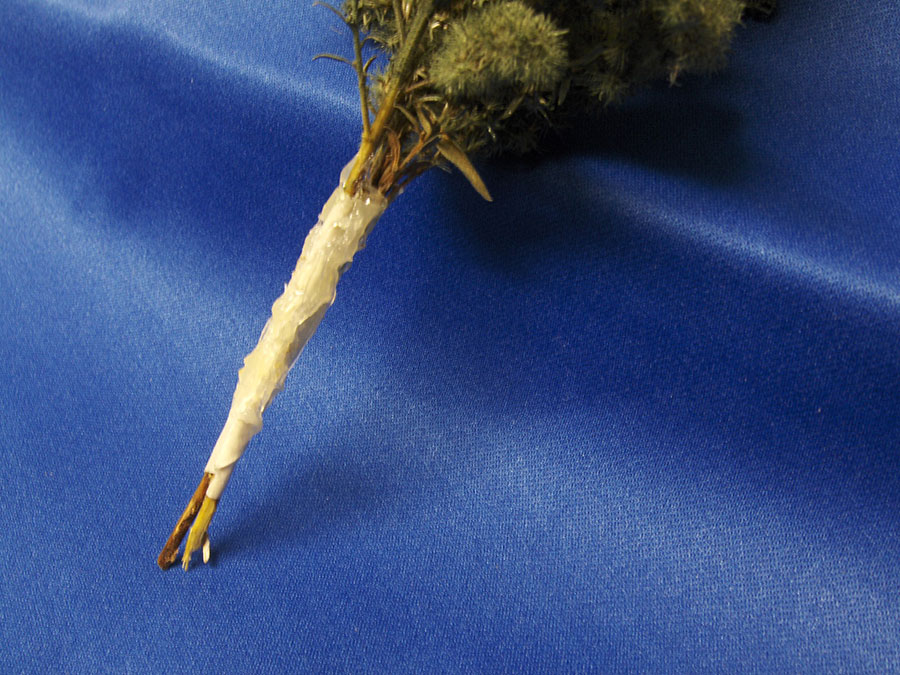 making model railroad trees from goldenrods-6