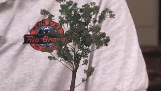Technique: Creating Quick Trees