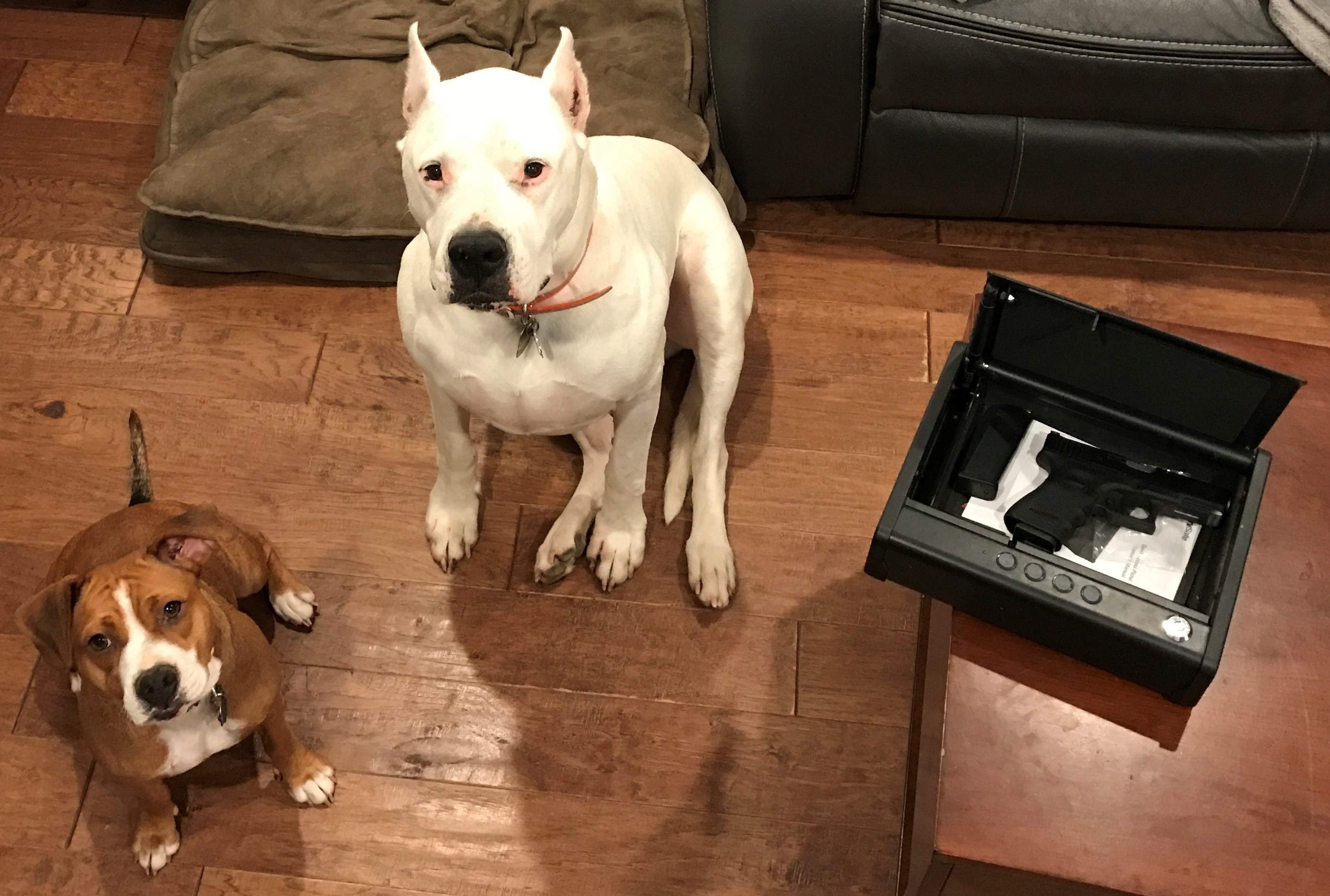 home defense dogs