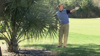 Ball Under Bush