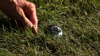 USGA Golf Rules: Rule 21 - Golf Ball Cleaning