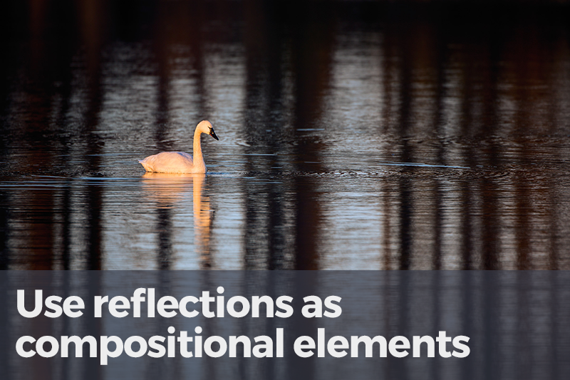 reflections-7