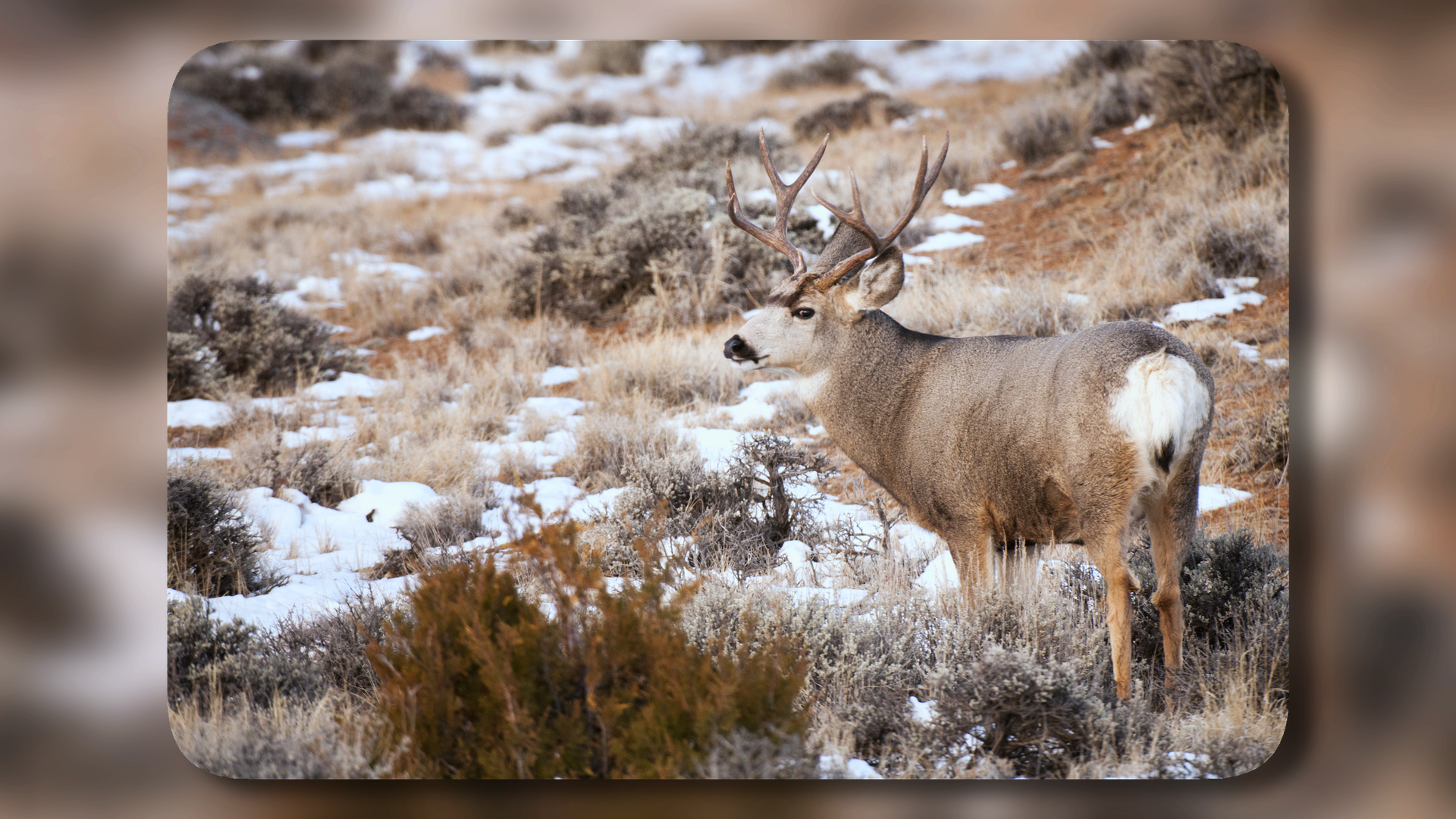 Photographing Colorado Elk at Rocky Mountain National Park