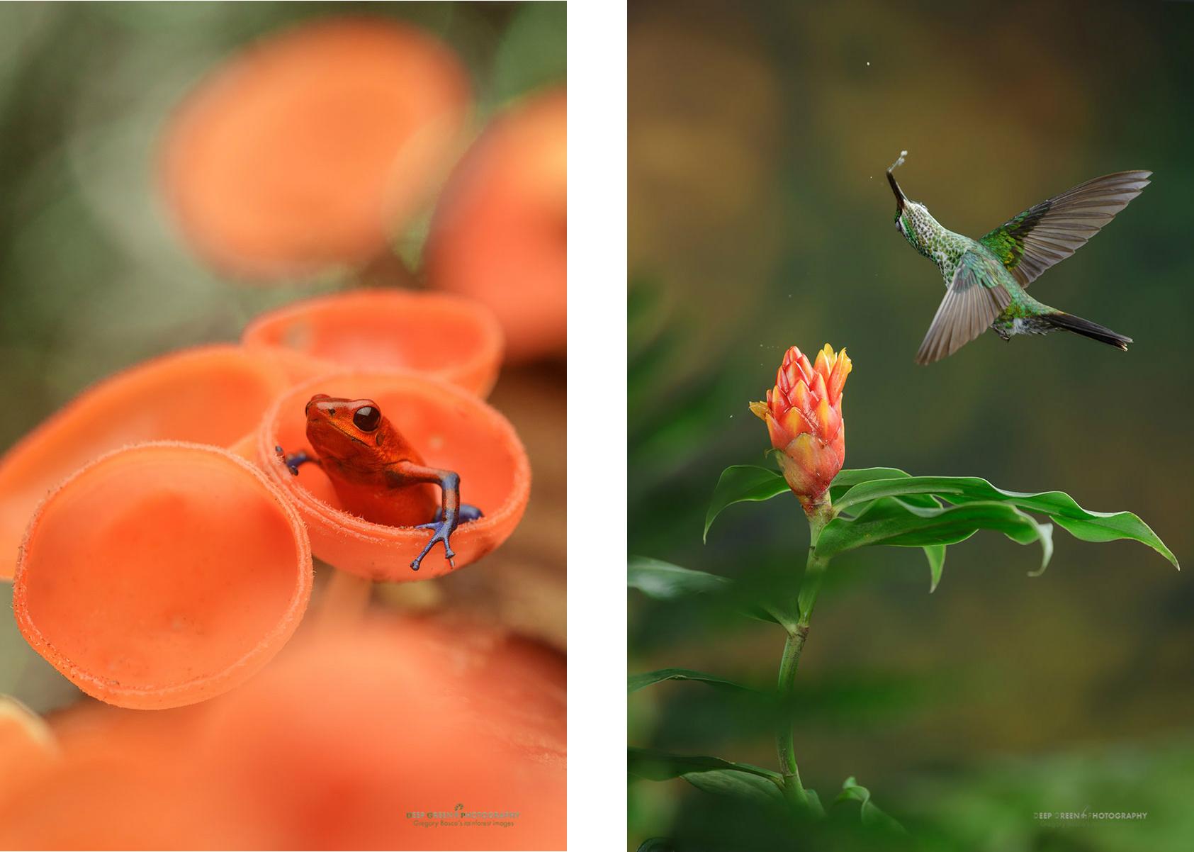 combine_images