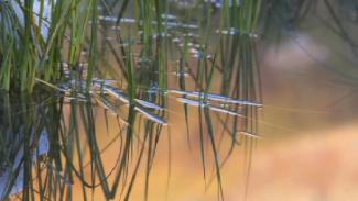 opg-012368f_b2c17u_c-grasses