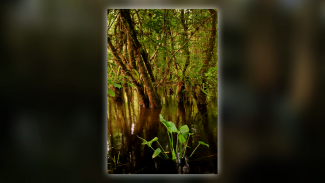 big-cypress-14