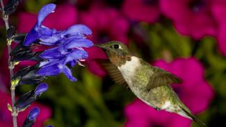 how-to-photograph-hummingbirds