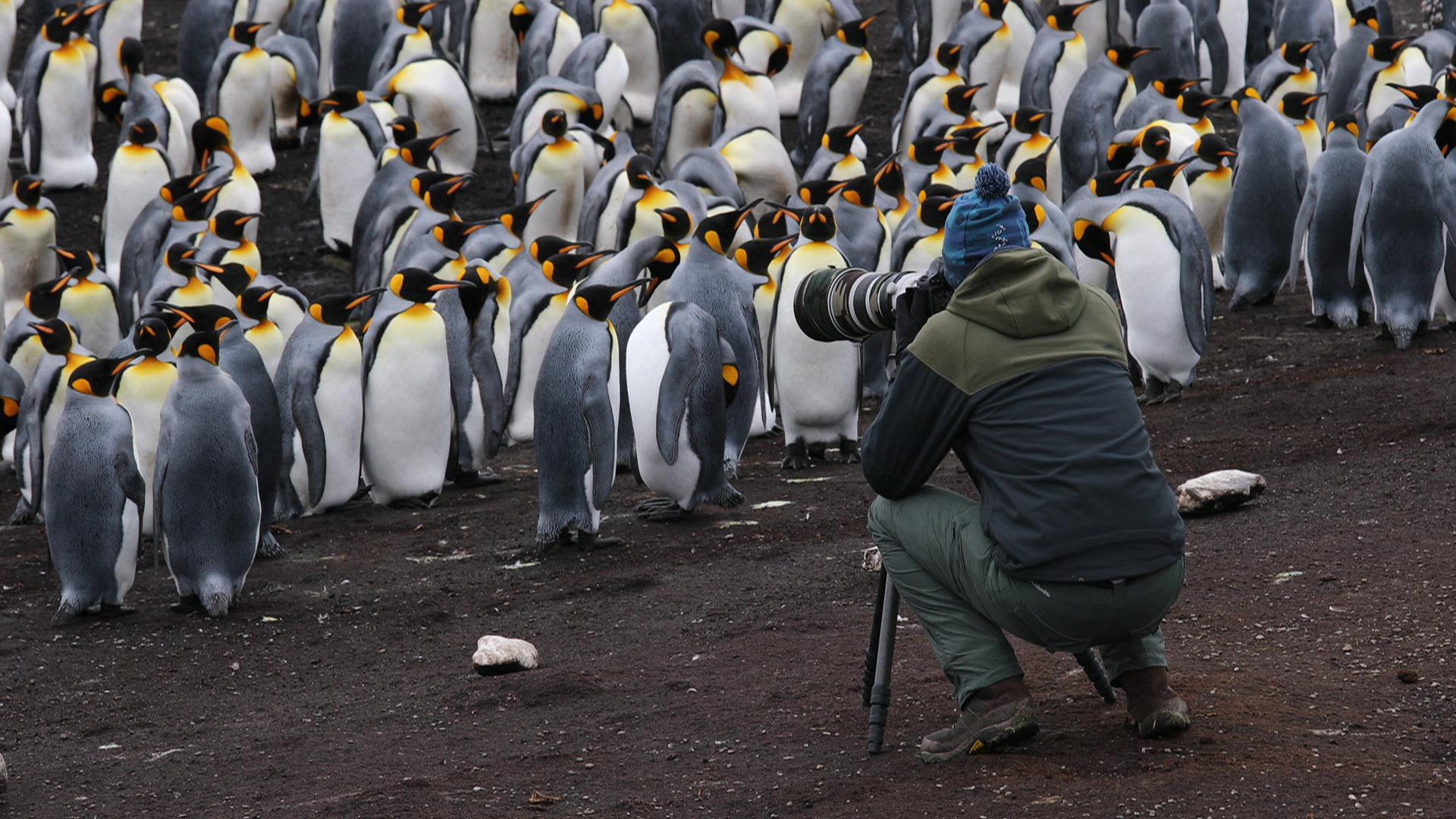 Wildlife Photography in the Falklands