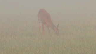 OPG 012541f_B2D90U_c Early Morning at Cades Cove-