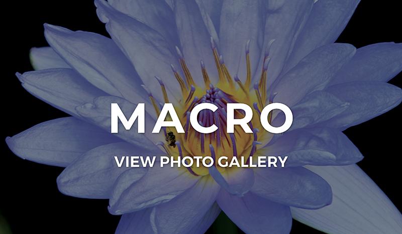 Macro Photo Gallery
