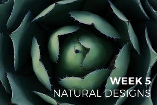 The Creative Photo Challenge - Week 5