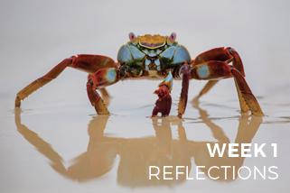 The Ultimate Photo Challenge - Week 1