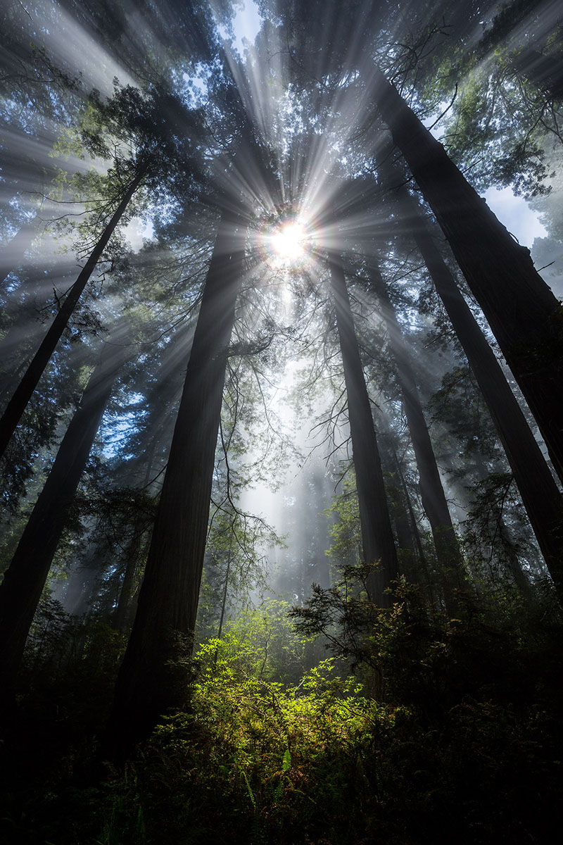 Redwood National Park, USA. Canon 5DIII, Canon 16- 35mm f/4L lens, polarizer filter, ISO 100, f/11, 1/25 second.