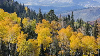 Fall Foliage Photography in the Mountains