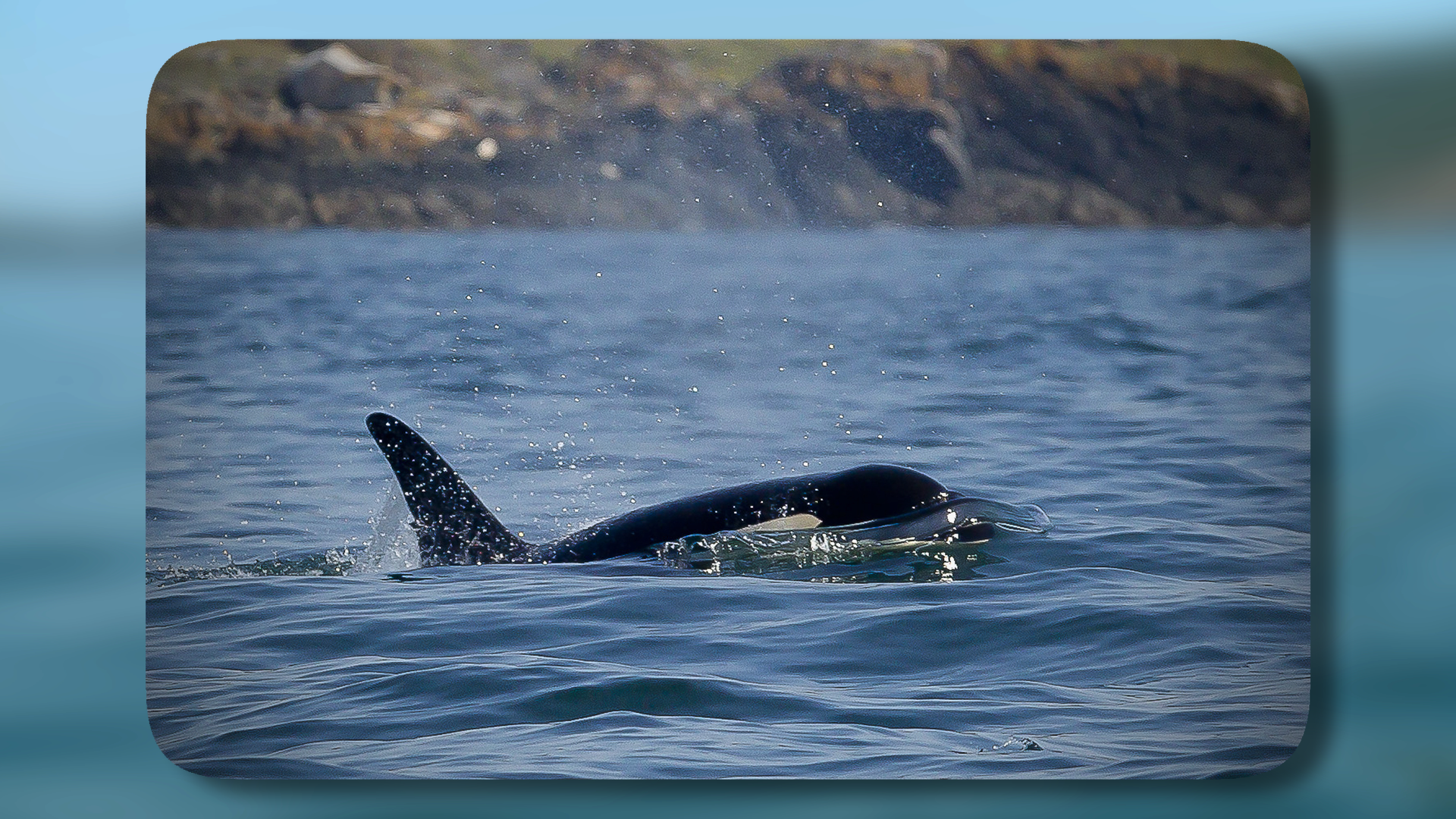 Photographing Whales and Seals Along Washington's Coast