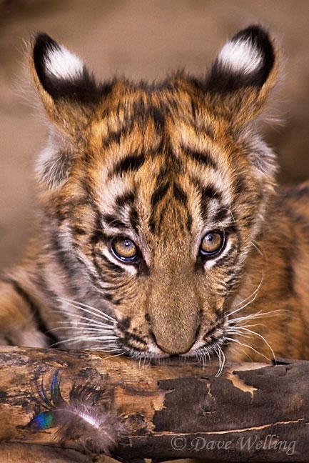 wildlifeportrait4