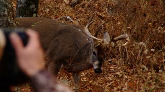 Shooting Buck Behavior