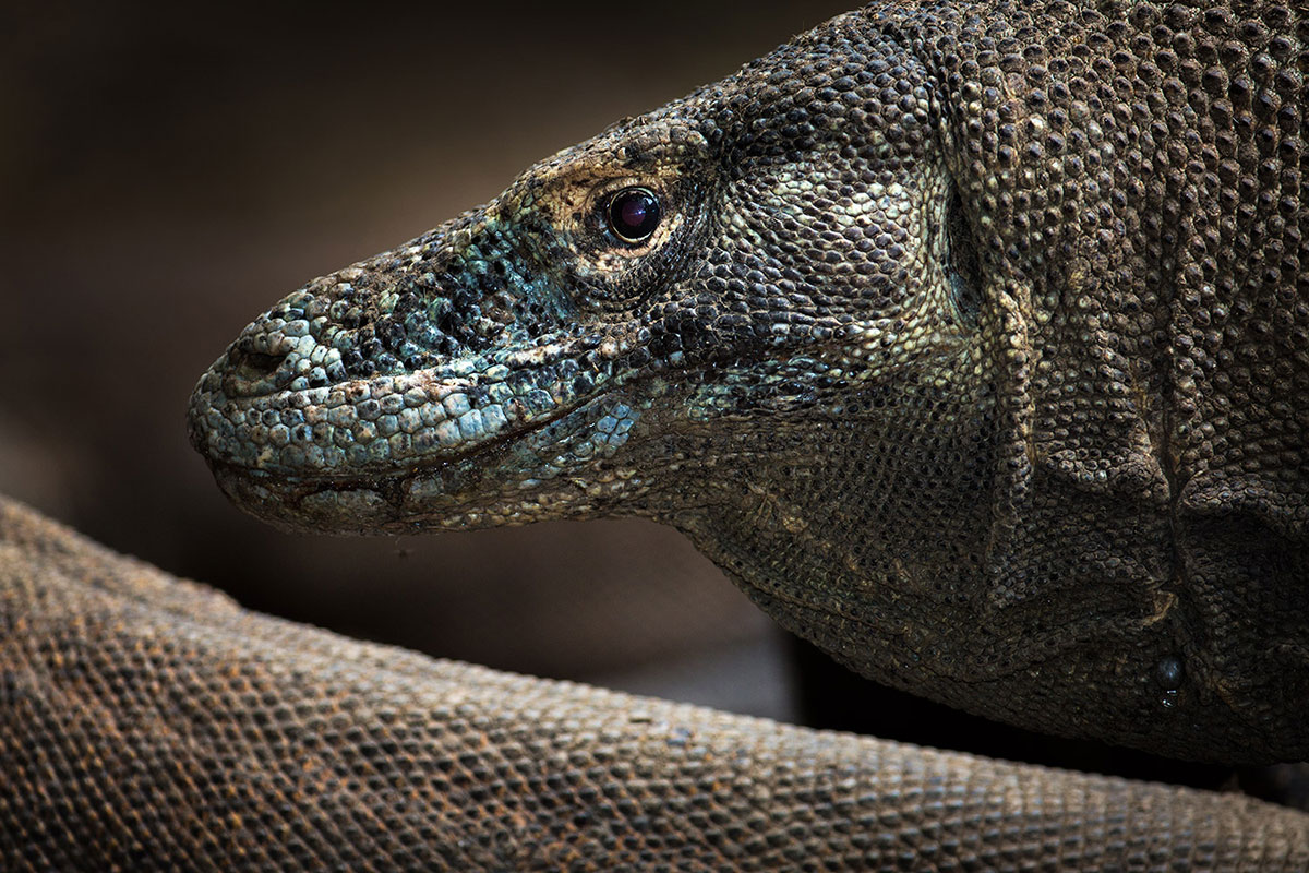 komodo-islands-4