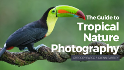 hero_Tropical Nature Photography_NEW