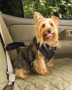 Traveling With Pets In Your Rv Things To Consider