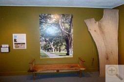 Turning Connecticuts Trees into Furniture