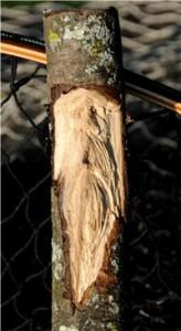 2 wood-spirit-2-164x300