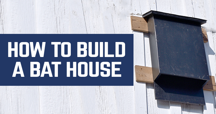How to build a bat house woodworkers guild of america for How to make a bat house